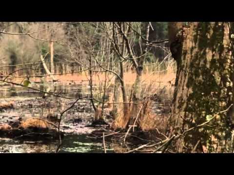 Ducks at beaver pond