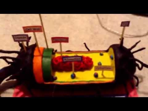 Bacteria Cell Model Project