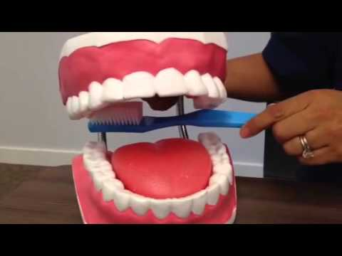 How to Properly Brush Your Teeth
