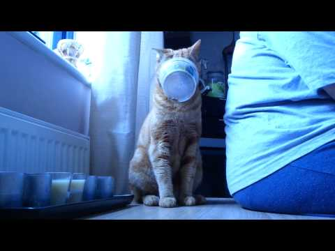 Cute ginger cat gets pot stuck on his head