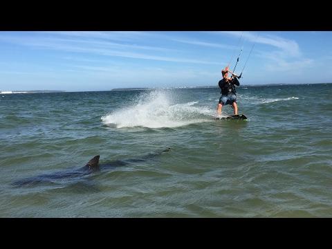 Shark Kitesurfer Brighton Le Sands Sydney by Adam Carmer (kiter Pierre Olivier)