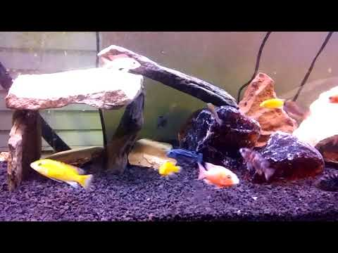 Animal Update new feeder setup?
