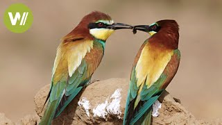 Storks and sappers: Birds of Spain and the Human Action (Animals Documentary in HD)