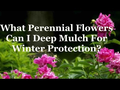 What Perennial Flowers Can I Deep Mulch For Winter Protection