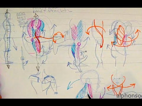 How to Draw Human Anatomy Part 1   Beginner Introduction