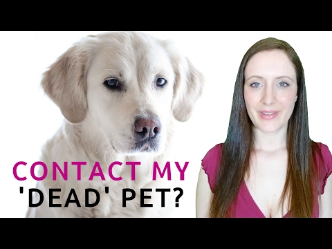 Can I Communicate With My Dead Pet? Contact My Pet That Died?