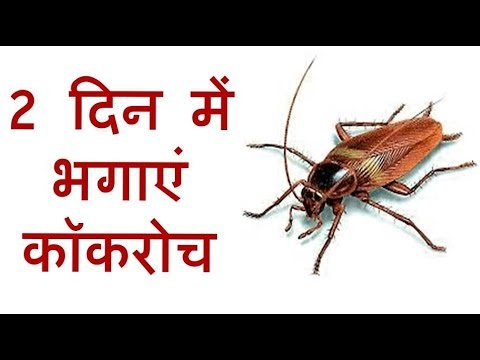 कॉकरोच भगाने के उपाय | How to get rid of cockroaches from home | Cockroach