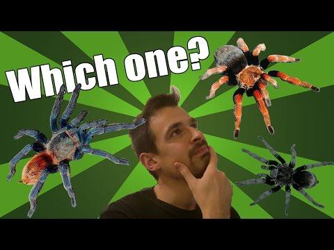 Best tarantula species for beginners   Tarantula pet guide