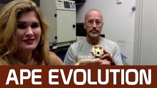 If we evolved from apes, why are there still apes?