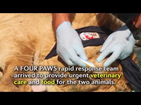 Xxx Mp4 Hope For The Last Wild Animals Of Mosul Zoo 3gp Sex