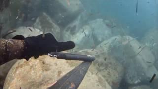 Pesca sub sottocosta 15 gennaio 2017