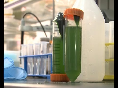 Chinese scientists use algae to generate hydrogen