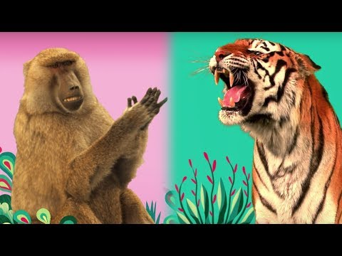 StoryBots | 🐻 Animal Songs! 🦁 | Listen and Learn Songs
