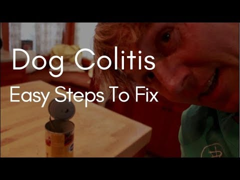 Dog Colitis: Easy Steps To Fix
