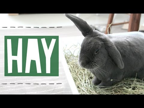 Where To Buy Hay? What Kind Of Hay To Buy?