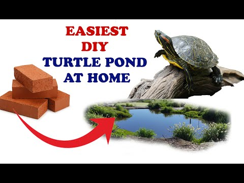 Best and cheapest turtle pond build ever# DIY TURTLE POND#