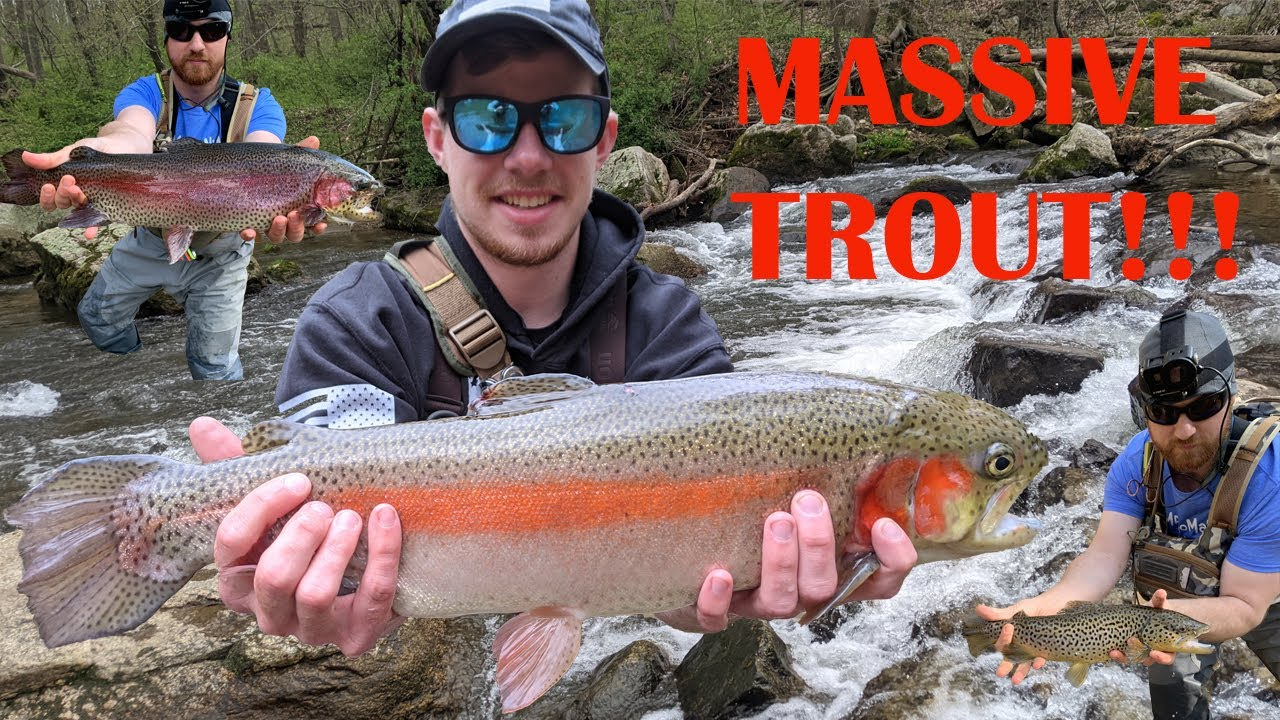 Multiple MONSTER Pennsylvania Trout! | SEPA Stocked Trout Fishing 2021