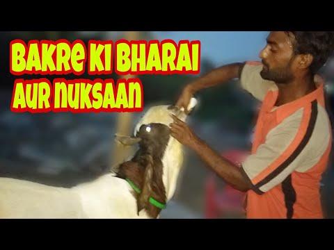 date:5:7:2019)pakistan ke number 1 bakre video zaror dekhe