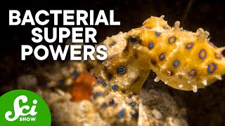 5 of the Coolest Partnerships Between Animals and Bacteria