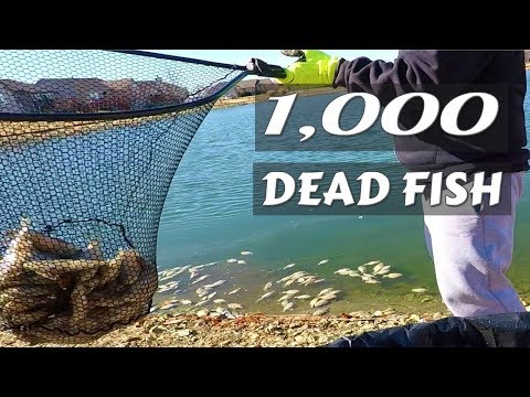 Cold Weather Kills Thousand of Stocked Fish, Opening Package From Countryside Lawn Care