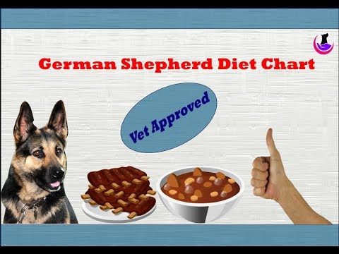 German Shepherd Diet Chart- Vet Approved