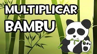Multiplicar bambú | Huerto y Jardín