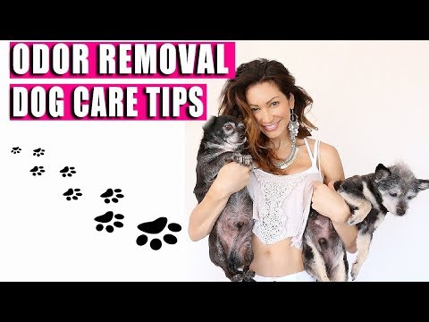 Dog TIPS - DOG CARE ADVICE - Odor Removal Tips