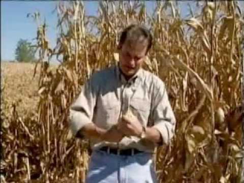 Feds Subsidize Profitable Corn