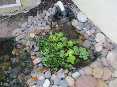 Diy Radial Flow Filter for Turtle Pond