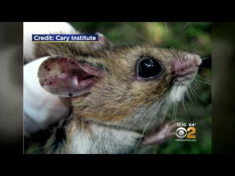 Experts Predicting A Jump In Lyme Disease This Year - CBS2 02-05-2017