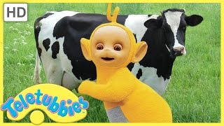 ★Teletubbies English Episodes★ Milking Cows ★ Full Episode - HD (S06E136)