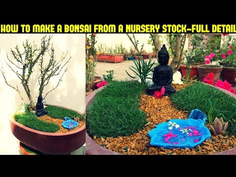 How To Make a Bonsai From a Nursery Plant-Fast N Easy