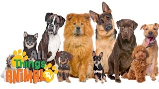 * DOGS * | Animals For Kids | All Things Animal TV