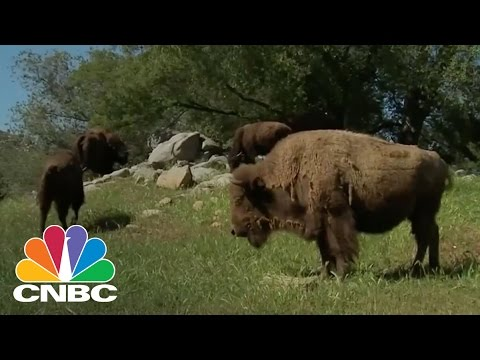 Demand For Bison Meat Soars   CNBC