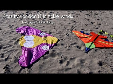 Kites fly (or don't) in fickle winds