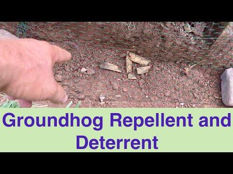 Groundhog Repellent and Deterrent