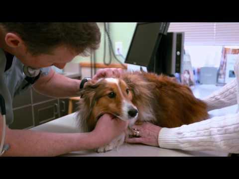 Canine periodontal disease - Animal hospital of Rowlett Dental Procedure