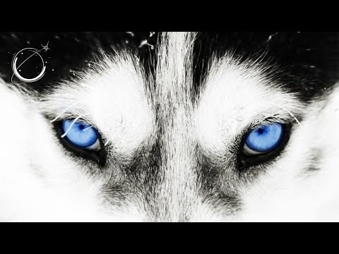 The Good Wolf - Motivational Video