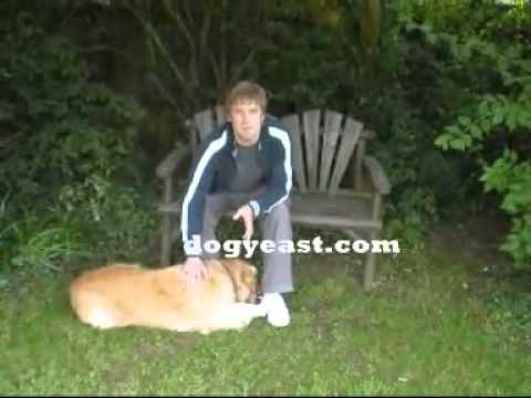 Dog Yeast Ear Infection Cure Naturally And Permenently