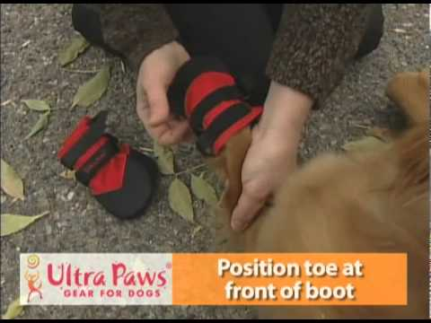 How to Put on Ultra Paws Dog Wound Boots | Keep Doggie Safe