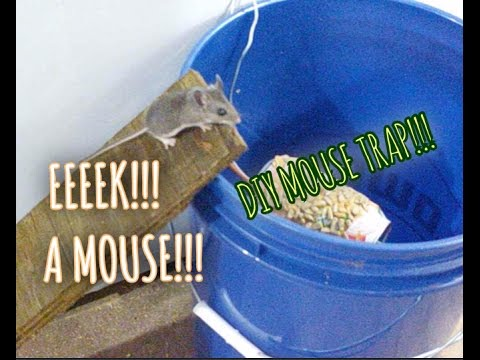 MOUSE TRAP BUCKET