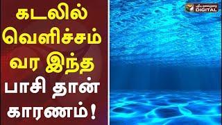 கடலில் வெளிச்சம் வர இந்த பாசி தான் காரணம்!   Blue glow spotted in Chennai beach #PTDigital