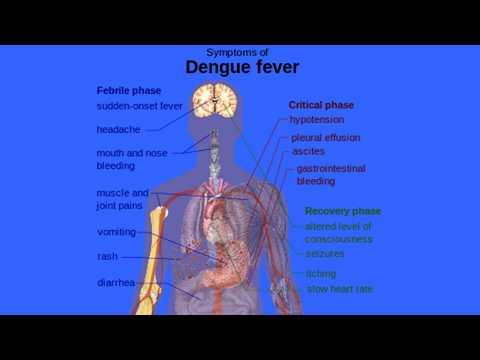 Diagnosis and treatment for dengue fever - ഡെങ്കിപനി എങ്ങിനെ തിരിച്ചറിയാം..