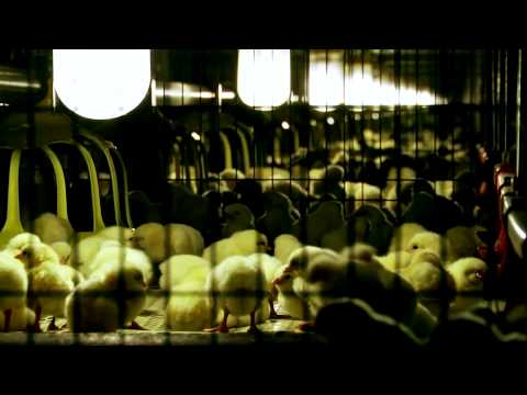 VALLI Attrezzature da Polli da Carne