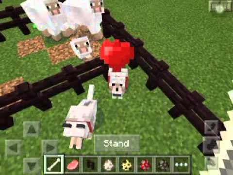 Minecraft PE! How to tame wolfs and ocelots! Also breed some animals!