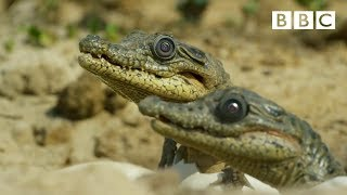 Sneaky spying crocodile camera - Spy in the Wild: Episode 1 Preview - BBC One