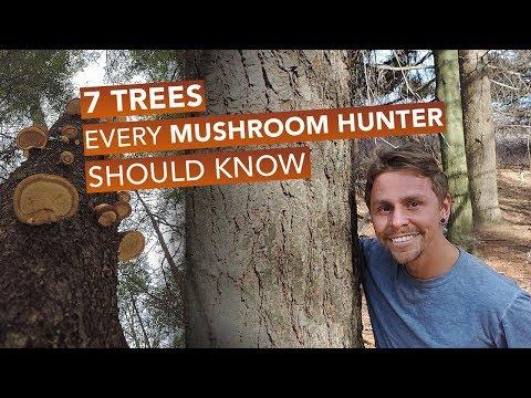 7 Trees Every Mushroom Hunter Should Know