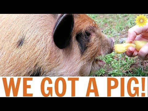 WHAT WE LEARNED HAVING A PIG AS A HOUSE PET FOR THE DAY | MEG + FIN