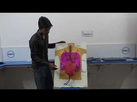 HOW TO MAKE A HUMAN HEART REALISTIC MODEL FOR PROJECT PURPOSE made by PANKAJ SONI