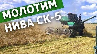 Молотим ячмень. Нива СК-5 и МТЗ-82 с ЮМЗ-6кл и 2ПТС. #СельхозТехника_ТВ №31
